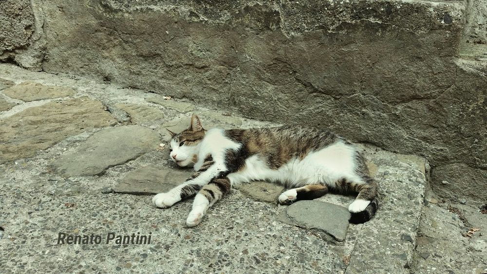 Zzzzzz.... Sleaping Sleaping Kitty Cat Cat Gatto Gatti Cats Animals Animali Sleaping Cat Samsung Galaxy S5