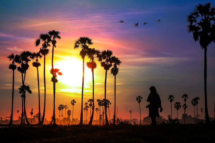 Silhouette people standing by palm trees against sky during sunset