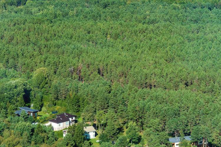 Houses at the edge of a forest. Picture taken from the top of the TV Tower in Tallin, Estonia. Houses Architecture Beauty In Nature Built Structure Day Environment Forest Green Color High Angle View Landscape Living In Nature Lush Foliage Nature No People Nordic Landscape Outdoors Plant Scenics - Nature Tranquility Tree WoodLand