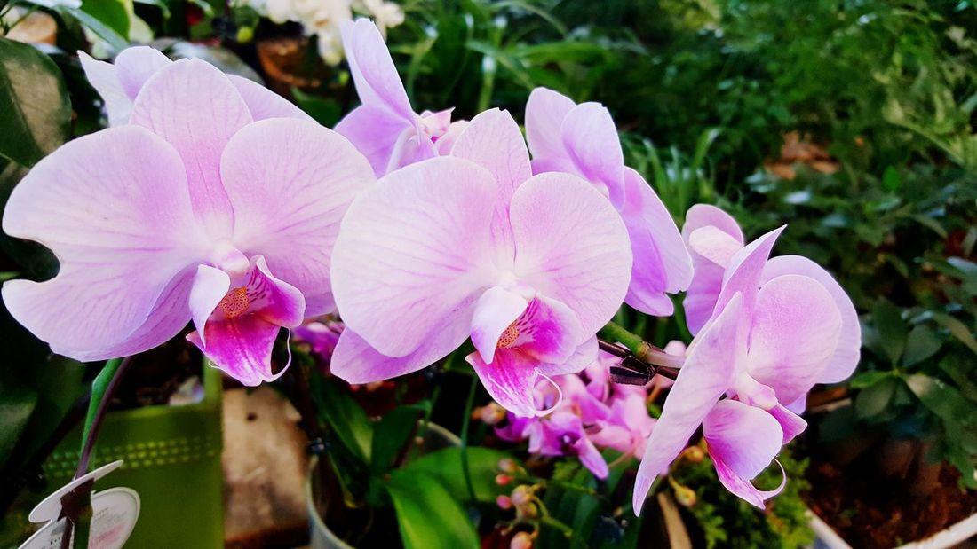Ikea Decor Ikeacanada Ikea♥ Ikea Design Spring Flowers Spring Into Spring Spring Idea Spring Design Orchids Orchids Garden HomedecorIKEA Homedesign