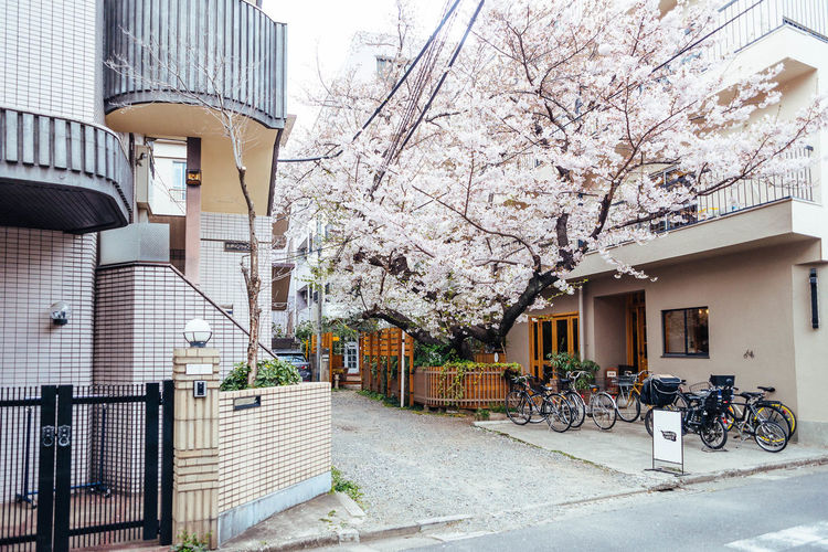 Cherry Blossoms in Hatagaya Architecture Branch Building Exterior Built Structure City Day Flower Growth Nature No People Outdoors Sakura Sky Tree