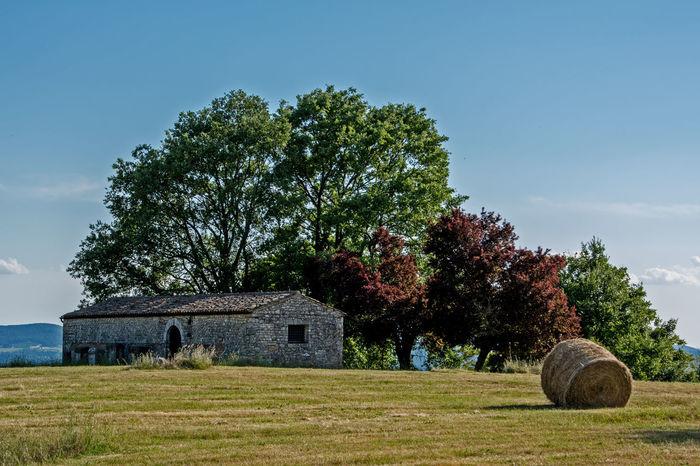 Campi di grano - Umbria Architecture Building Exterior Campi Clear Sky Field Grain Grass House Outdoors Tree