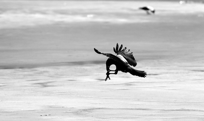 View of seagull flying over beach