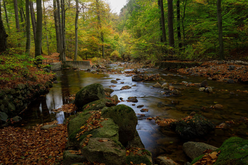 Ilsetal Tadaa Community Autumn Beauty In Nature Day Forest Harz Landscape Leaf Moss Nature No People Outdoors Plant River Scenics Tranquil Scene Tranquility Tree Water WoodLand