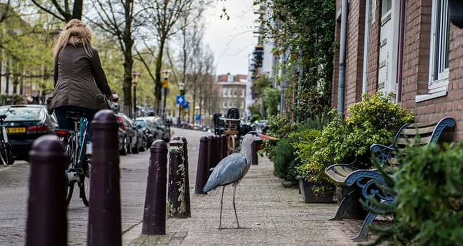 Burger Amsterdam Birds Naturevscity Strangers In Transit Coffeshop Animal Love Animalfunny