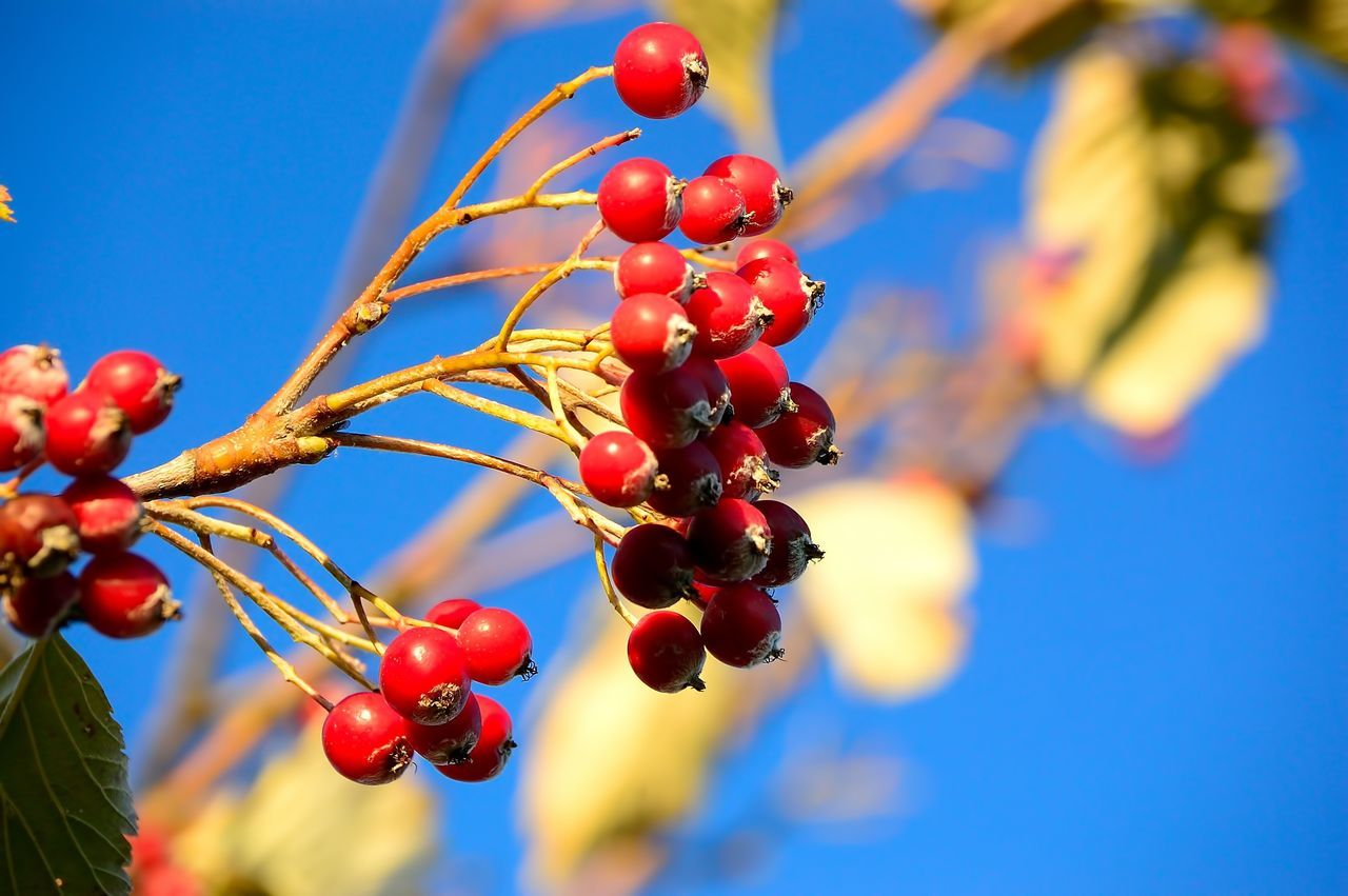 Close-Up Of Red Berry Fruits On Twig Against Sky