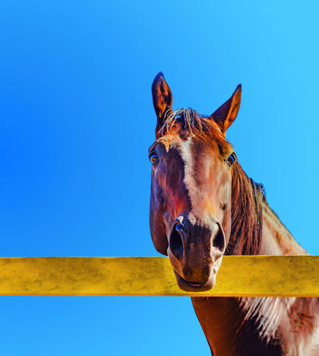 Horse standing in ranch against clear blue sky