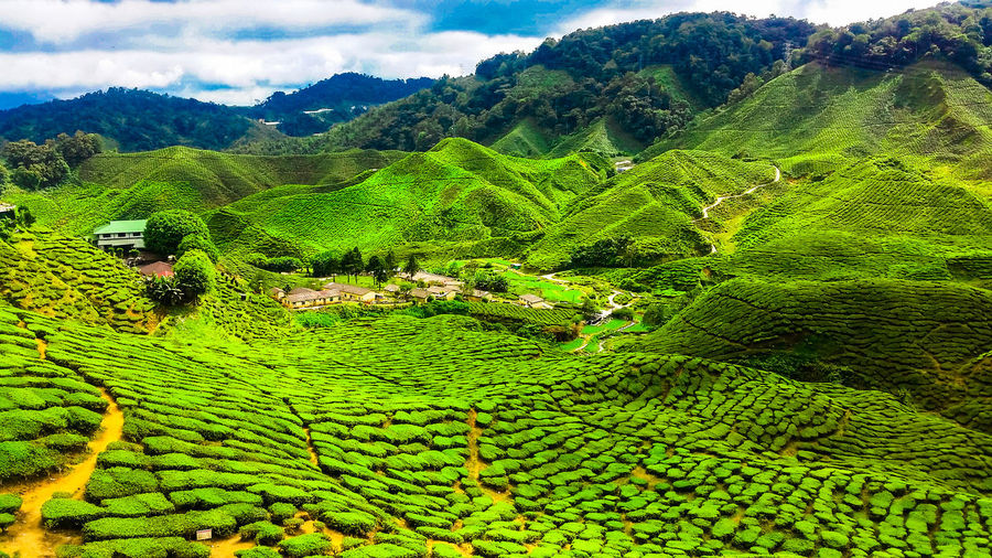 High angle view of rice field against mountain range