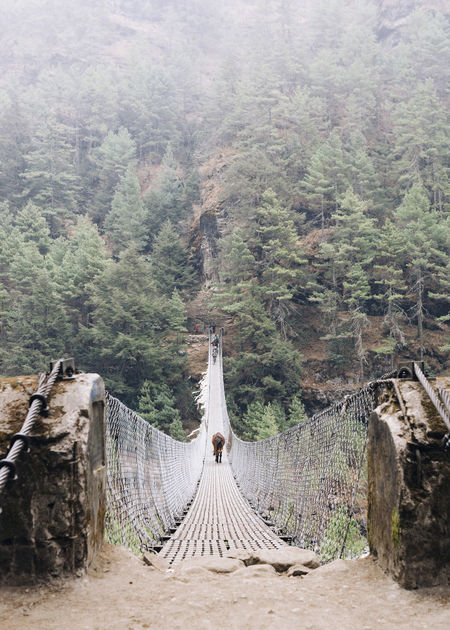 EBC Trek 2018 The Week on EyeEm Architecture Beauty In Nature Bridge Bridge - Man Made Structure Built Structure Crossing Day Domestic Animals Environment Fog Forest Horse Land Landscape Mountain Nature No People Outdoors Plant Rope Scenics - Nature Tranquility Travel Destinations Tree