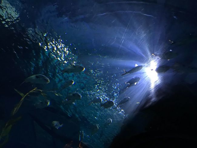 Night Underwater Nature UnderSea Water Sea Real People Music Festival Group Of People Light - Natural Phenomenon Lifestyles Illuminated Leisure Activity Unrecognizable Person Beauty In Nature Swimming Adventure Blue People Outdoors