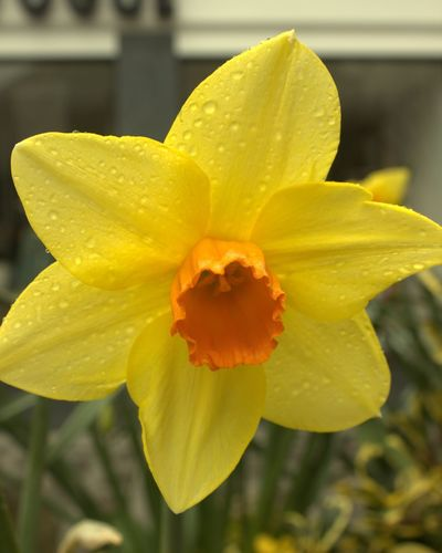 Flower Head Flower Water Yellow Springtime Petal Summer Close-up Plant Day Lily Daffodil Stamen Focus Plant Life In Bloom Blossom Pollen Blooming