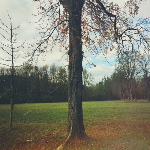 Tree Nature Grass Sky Growth Tranquility Tree Trunk Malerisch Herbst Fall Beauty In Nature Fall Beauty No People Outdoors Bare Tree Day Field Tranquil Scene Branch Scenics Landscape