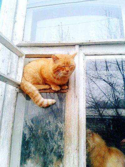 Cat stuck in glass window