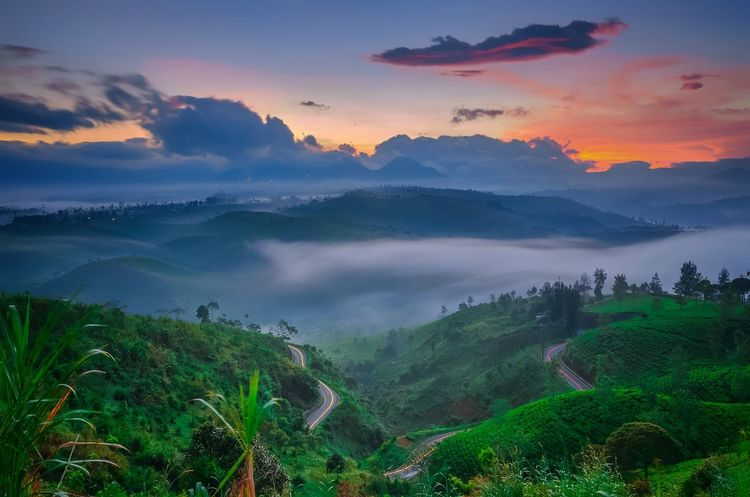 In Color Landscape Landscape_Collection Nature Nature_collection Naturelovers Sunrise Sunrise_sunsets_aroundworld EyeEmBestPics EyeEm Best Shots - Nature EyeEm Best Shots EyeEm Nature Lover Athmosphere Panoramic Panoramic Landscape Sunrise_Collection Cukul Pangalengan West Java  INDONESIA Tea Crop Tree Beauty Dawn Fog Rural Scene Agriculture Hill Agricultural Field Farmland Valley EyeEmNewHere