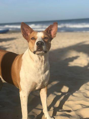 Dog Sand Pets