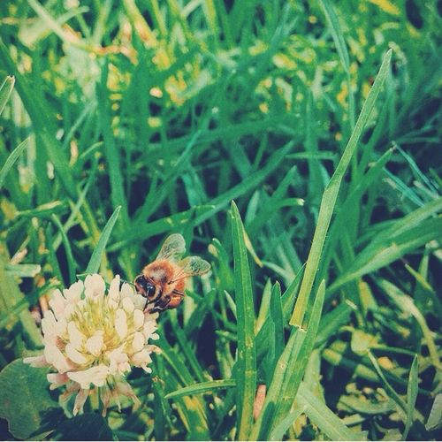 Nature The Illusionist - 2014 EyeEm Awards Green Bee