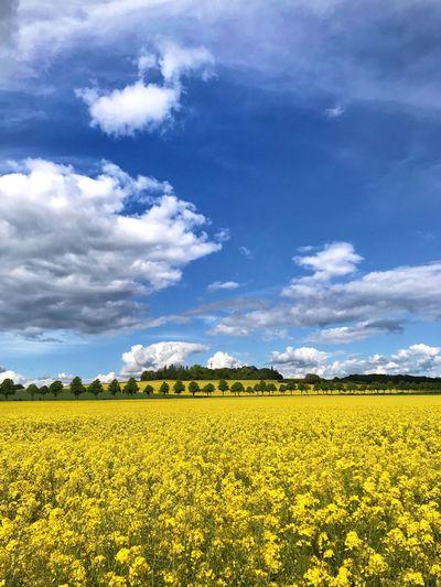 Yellow world 🌎