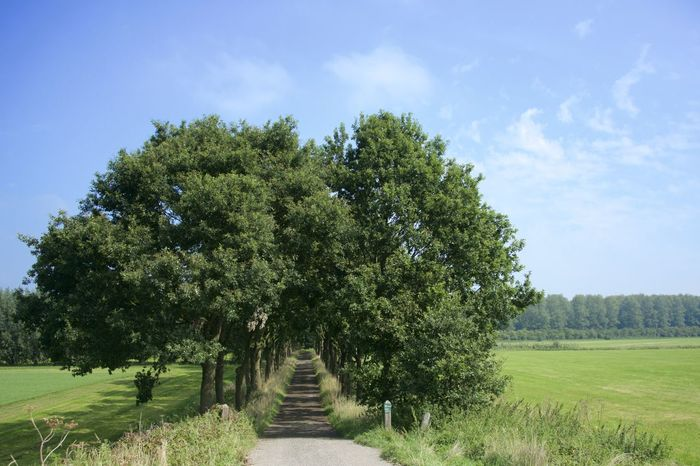 Dutch cycle route 'Rondje Posbank' in Gelderland. Netherlands The Netherlands Dutch Growth Holland Landscape Nature Scenics Tranquil Scene Tranquility Tree