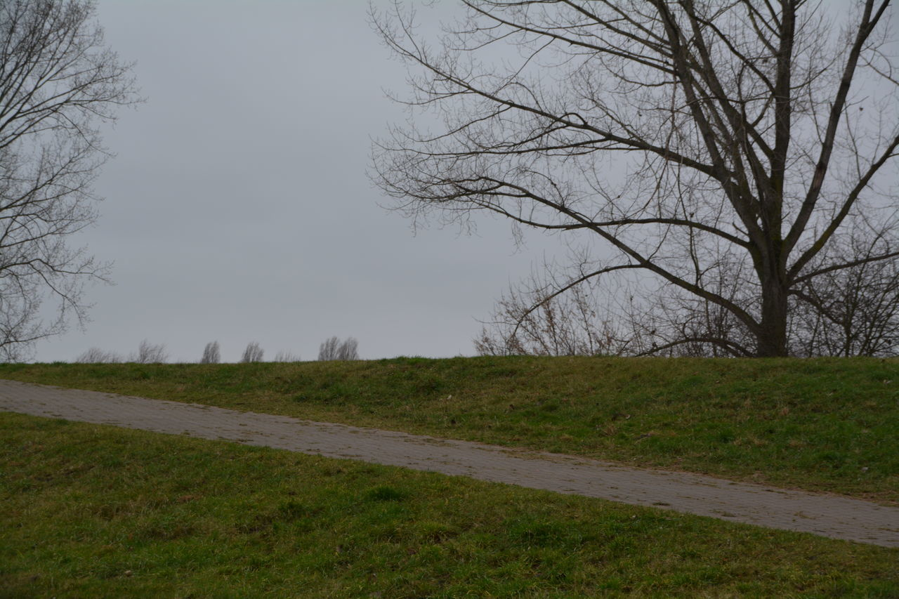 bare tree, tree, nature, tranquility, grass, road, beauty in nature, no people, outdoors, landscape, scenics, day, sky