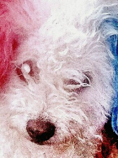 Doggy Love Red White And Blue Dont Look At Me Doggie Love Staredown Dogoftheday Scruff U Up Scruffage Doggy ♥ Doggielove