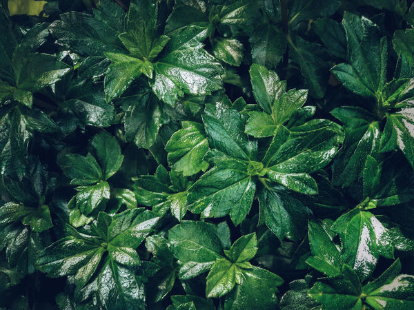 Leaf Nature Growth Green Color Beauty In Nature Close-up No People Backgrounds Plant Full Frame Outdoors Tree Freshness Day