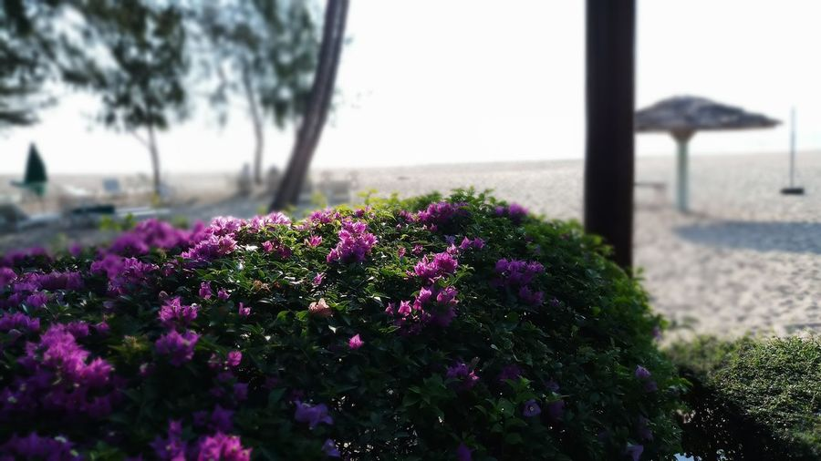 Beauty In Nature Blooming Close-up Day Flower Focus On Foreground Fragility Freshness Growth Nature No People Outdoors Plant Purple Scenics Sky Tranquility Tree