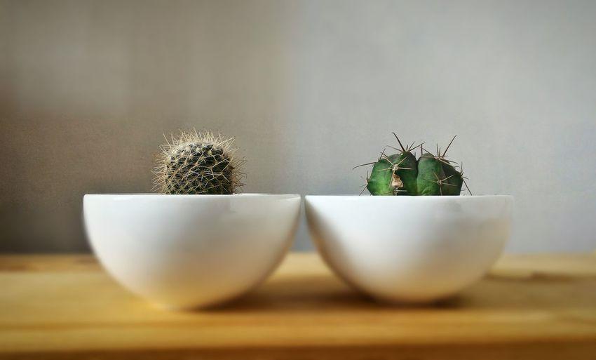 Close-Up Of Cactus In Bowl