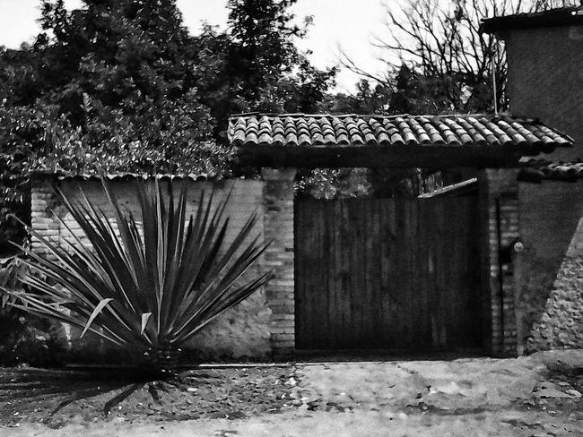 El espíritu de México Architecture No People Rural Scene The Past Wall - Building Feature Exterior Tree Built Structure