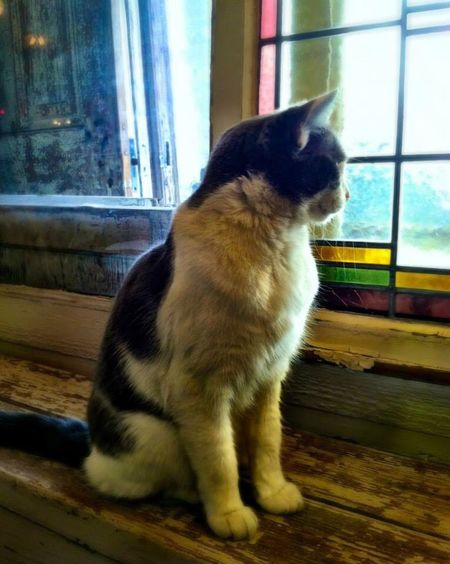The Explorer - 2014 EyeEm Awards Animals Window Cat