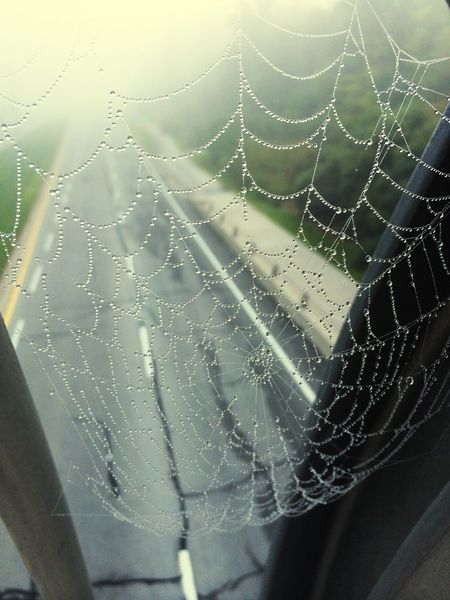 Nature_collection Miracles Cobweb Beauty In Nature Beautiful Streetphotography Spring Morning Dew Morning Urban