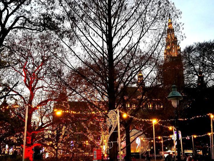 Illuminated Outdoors Tree Rathaus Rathausplatz Rathausmarkt Vienna