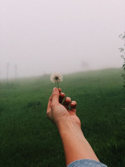 Cropped hand holding dandelion on grassy field against clear sky during foggy weather