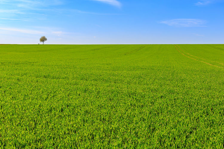 Fields around Köngen Lonely Tree Lonesome Tree Single Tree Tree Agriculture Animal Beauty In Nature Environment Field Grass Green Color Horizon Horizon Over Land Köngen Land Landscape Meadow Nature No People Outdoors Plant Rural Scene Scenics - Nature Sky Springtime Tranquil Scene