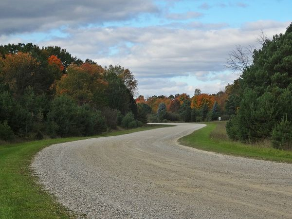 Tree Growth Sky Cloud - Sky Outdoors The Way Forward Scenics Beauty In Nature Nature_collection EyeEm Nature Lover Showcase October No Filter No Edit The Purist(No Edit,no Filter) Autumn🍁🍁🍁 Pure Michigan Winding Road Collection