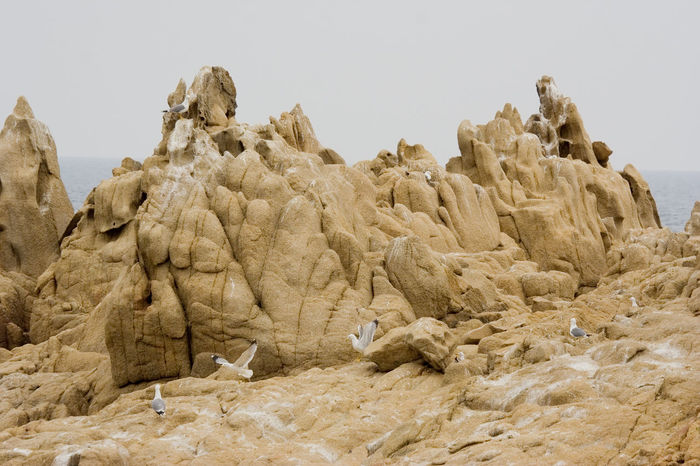 seagulls on the rocks - French Riviera Beauty In Nature Bird Cliff Coast Colony Dirty Dropping France French Riviera Group Of Animals Gull Laridae Mediterranean  Mediterranean Sea Nature Nest No People Provence Rock Rock - Object Rock Formation Rock Hoodoo Sea Seagull Seagulls