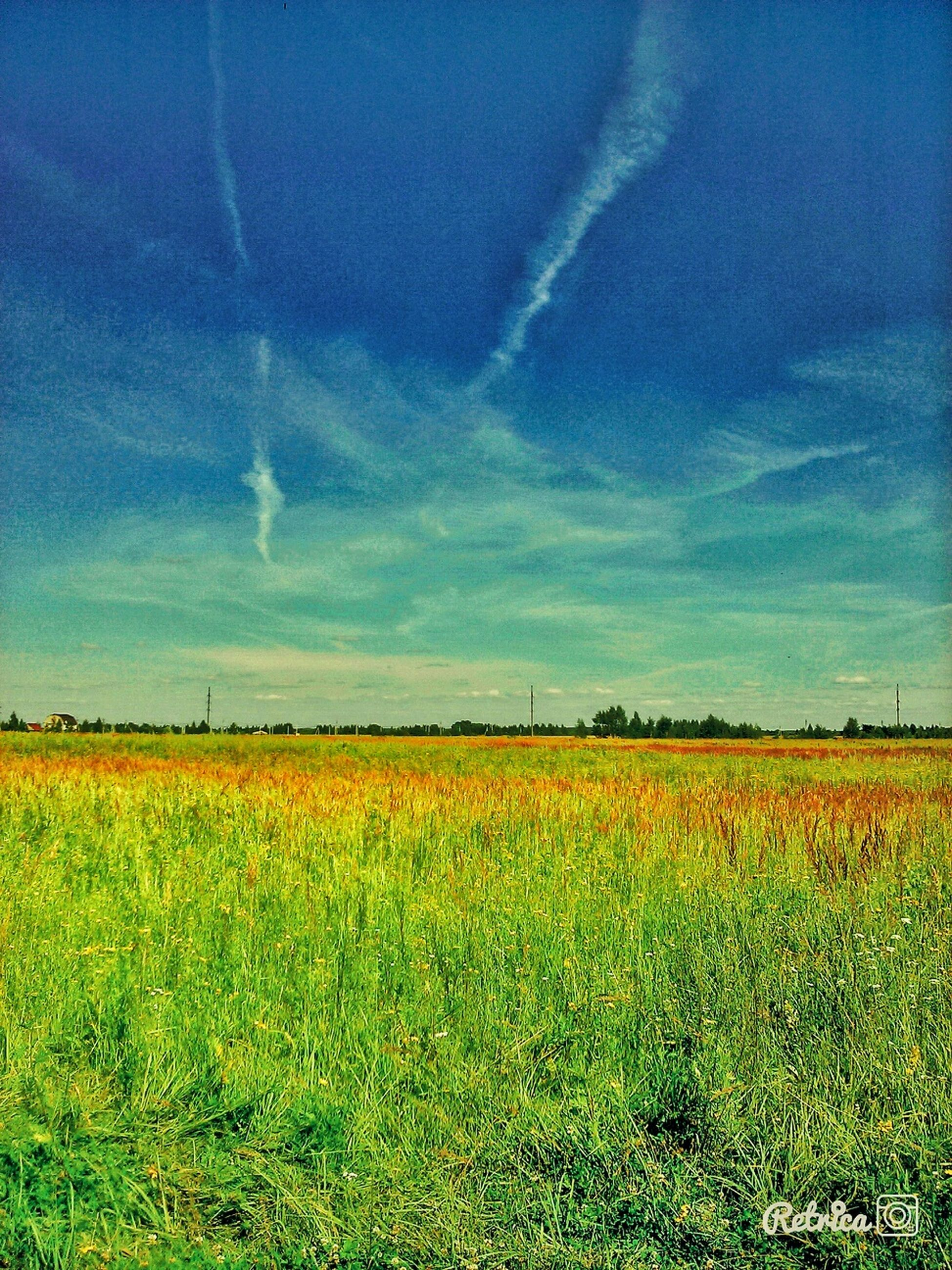 field, tranquil scene, beauty in nature, landscape, rural scene, sky, tranquility, yellow, agriculture, scenics, growth, flower, nature, blue, farm, crop, cloud - sky, cloud, horizon over land, plant