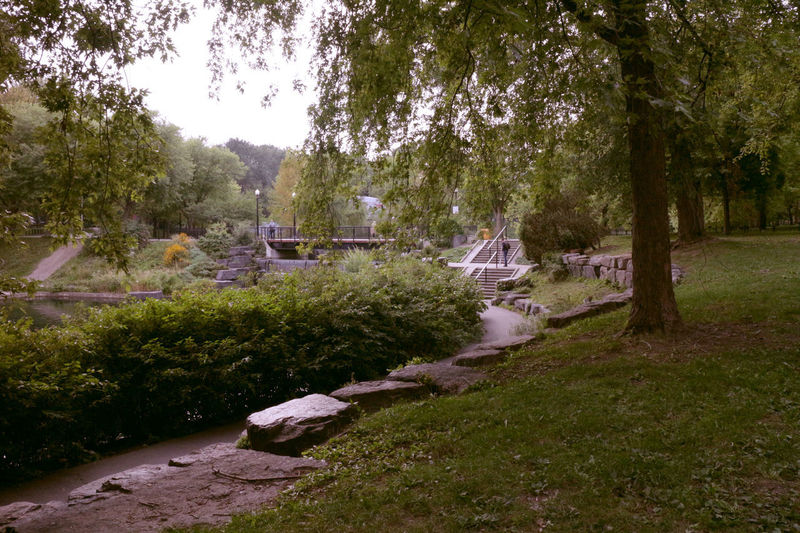Photos taken in and around Montreal, fall of 2018. Montréal Green Life Park Parc Lafontaine Fall Beauty Plants Plant Nature No People Day Growth Beauty In Nature Land Outdoors