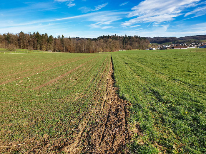 Crop rotation of a cultivated agricultural field that has recently been abandoned with grass.