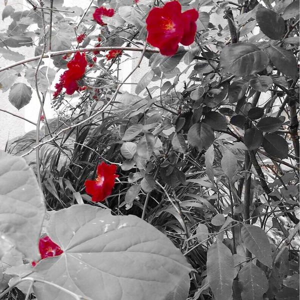Flowers Red Color Filter Plants Nature Lewisburg, Ohio