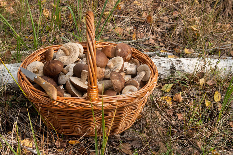 Basket Container Day Edible Mushroom Field Food Food And Drink Forest Fungus Grass Growth High Angle View Land Mushroom Nature No People Outdoors Plant Stick - Plant Part Vegetable Wicker