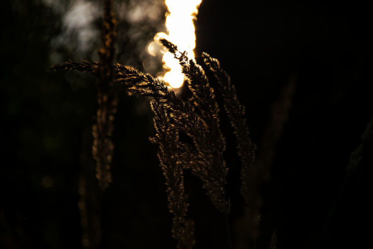 Beauty In Nature Botany Close-up Dark Day Detail Dried Plant Focus On Foreground Fragility Growth Natural Pattern Nature No People Outdoors Plant Selective Focus Sky Tranquility Twig