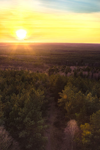 Sunset over fir forest Aerial View Beauty Beauty In Nature Day Drone  Fir Fir Forest Landscape Nature No People Outdoors Rural Scene Scenics Sky Sun Sunbeam Sunlight Sunset Tranquil Scene Tranquility Tree Yellow