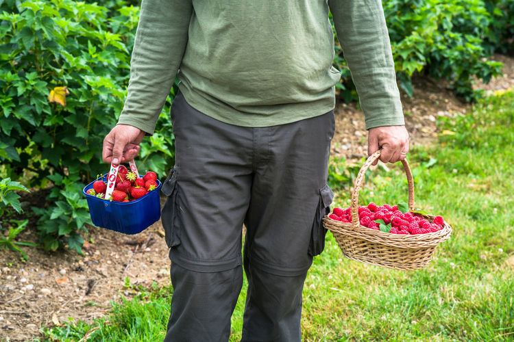 Midsection Of Man Holding Baskets With Raspberries And Strawberries At Yard