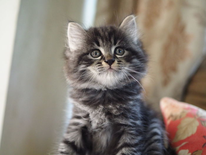 Close-up portrait of kitten on bed