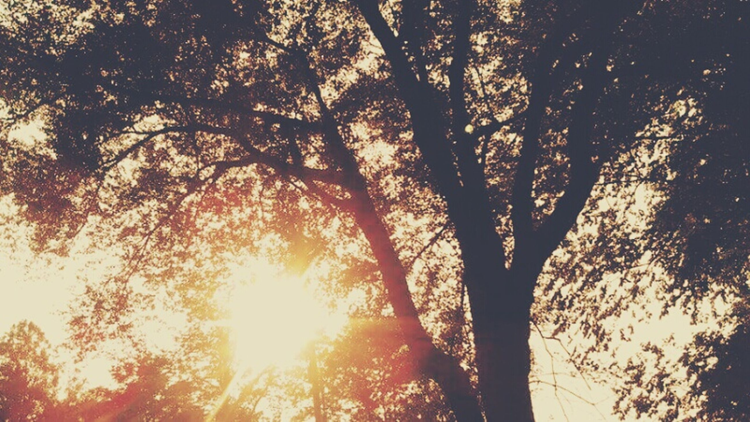 tree, sun, low angle view, branch, sunlight, tranquility, silhouette, sunbeam, nature, beauty in nature, growth, sunset, scenics, lens flare, tranquil scene, sky, back lit, orange color, outdoors, no people