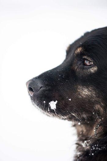 Dog Snow Winter Snowfalling