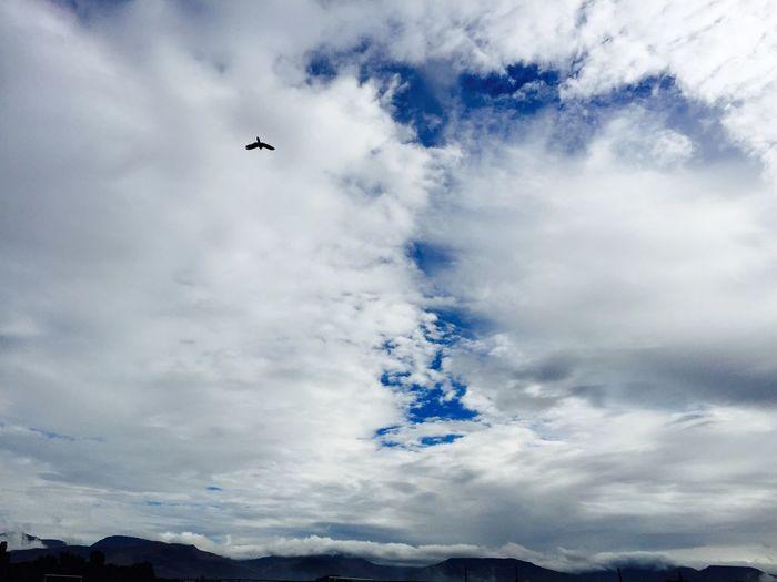 Home Is Where The Art Is Las aves fuera del área de trabajo, en este cielo ...