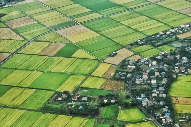 Japan Photos High Angle View Green Color From An Airplane Window Natural Beauty Travel Grass Day Plant Growth Tranquility Agriculture Outdoors Aerial View Landscaped Formal Garden Footpath Rural Scene Streamzoofamily Streamzoofamily Friends The Great Outdoors - 2017 EyeEm Awards