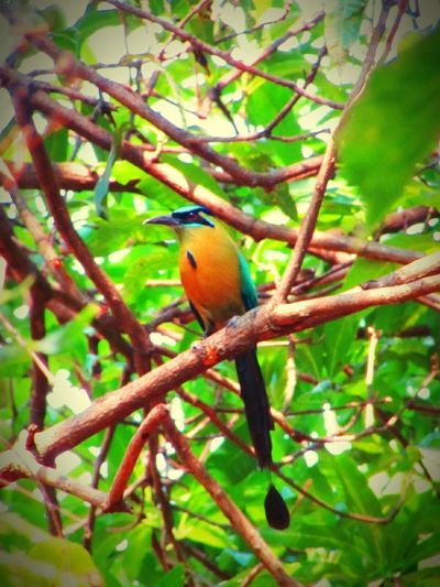 Bird Photography Bird Green Green Green!  Beauty In AveNacionalSV Nature Photography Outdoors