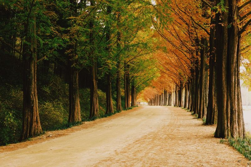 Metasqua road Tree Plant The Way Forward Direction Growth Nature Diminishing Perspective Beauty In Nature Road Tranquility Treelined Day Outdoors No People Scenics - Nature